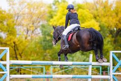 Giovane ragazza del cavaliere sul cavallo di baia che salta sopra la barriera Fotografia Stock Libera da Diritti