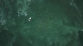 Giovane ragazza del surfista che cerca per le onde video d archivio