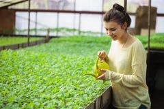 Giovane ragazza dell'agricoltore che innaffia le piantine verdi in serra Fotografie Stock Libere da Diritti