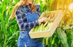 Giovane ragazza dell'agricoltore sul campo di grano Fotografie Stock Libere da Diritti