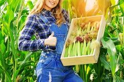 Giovane ragazza dell'agricoltore sul campo di grano Fotografia Stock