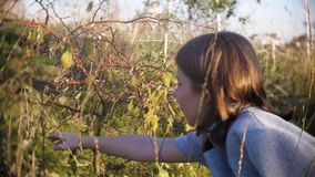 Giovane ragazza teenager in un cappotto grigio che esamina una bacca selvatica rossa nel parco un giorno soleggiato video d archivio