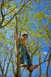 Giovane ragazzo alto su in un albero immagine stock libera da diritti