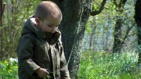 Giovane ragazzo che gioca con l'erba nel cortile 02 archivi video