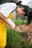 Giovane ragazzo che lavora allo stabilimento lattiero-caseario di Rican della Costa Immagine Stock