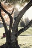 Giovane ragazzo che scala un albero di autunno con un chiarore luminoso del sole sopra la h Immagine Stock