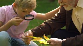 Giovane ragazzo che studia le foglie tramite la lente d'ingrandimento con suo nonno in parco stock footage