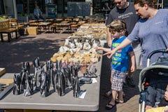 Giovane ragazzo che verifica i minerali su esposizione Fotografia Stock Libera da Diritti
