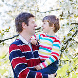 Giovane ragazzo del bambino e del padre in giardino di fioritura Immagini Stock Libere da Diritti
