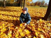 Giovane ragazzo del primo piano con le foglie di caduta immagini stock libere da diritti