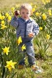 Giovane ragazzo sulla caccia dell'uovo di Pasqua nel campo del Daffodil Immagini Stock