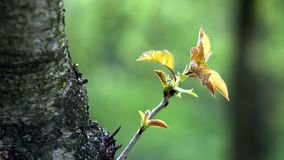 Giovane ramo su un fondo verde Immagini Stock