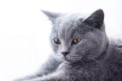 Giovane ritratto sveglio del primo piano del gatto fotografie stock libere da diritti