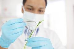 Giovane scienziato nel laboratorio di scienze biologiche Fotografia Stock Libera da Diritti