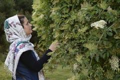 Giovane sguardo musulmano della donna e fiori commoventi Immagine Stock Libera da Diritti