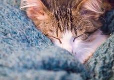 Giovane sonno del gatto immagine stock libera da diritti