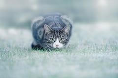 Giovane Tabby Cat su gelo Fotografia Stock