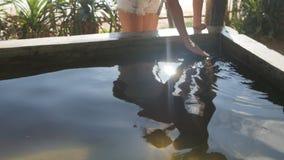 Giovane tartaruga di segno turistica femminile che nuota in acquario Viaggiatore con zaino e sacco a pelo della donna che esamina stock footage