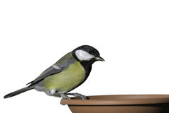 Giovane uccello Immagini Stock