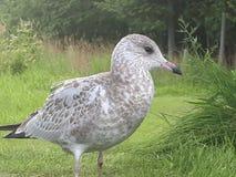 Giovane uccello fotografia stock libera da diritti