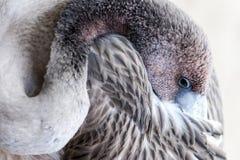 Giovane uccello del fenicottero Fotografie Stock