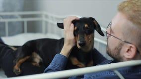 Giovane uomo alla moda allegro che gioca con il bassotto tedesco del cane sul letto Divertiresi del cane e dell'uomo video d archivio