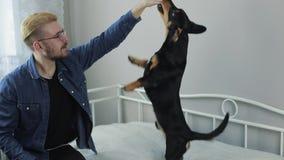 Giovane uomo alla moda allegro che gioca con il bassotto tedesco del cane sul letto Divertiresi del cane e dell'uomo stock footage
