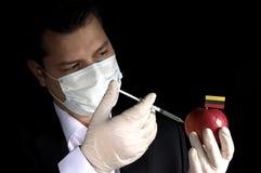 Giovane uomo d'affari che inietta i prodotti chimici in una mela con la bandiera lituana su fondo nero Immagine Stock