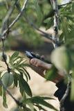 Giovane uomo dell'agricoltore che per mezzo del suo smartphone Immagini Stock Libere da Diritti