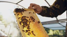 Giovane uomo dell'apicoltore che tiene struttura di legno con le api per il controllo mentre lavorando in arnia video d archivio