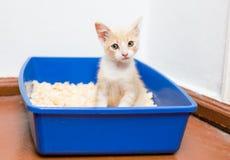 Giovane uso del gatto la toilette fotografia stock libera da diritti