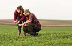 Giovani agricoltori che examing giovane grano piantato durante la stagione invernale Fotografie Stock Libere da Diritti