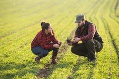 Giovani agricoltori che examing giovane grano piantato durante la stagione invernale Fotografie Stock