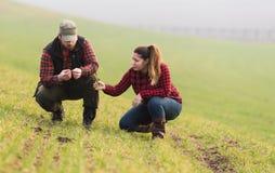Giovani agricoltori che examing giovane grano piantato durante la stagione invernale Fotografia Stock Libera da Diritti