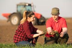 Giovani agricoltori che examing grano piantato mentre il trattore sta arando il fi Immagine Stock