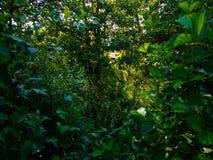 Giovani alberi Fotografia Stock Libera da Diritti