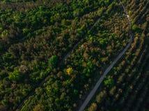 Giovani alberi, piantagioni sui pendii Cima gi? la vista aerea sul canyon di Nistro, fiume, baia di Bakota in parco nazionale Pod fotografia stock libera da diritti