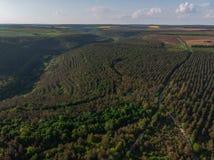 Giovani alberi, piantagioni sui pendii Cima gi? la vista aerea sul canyon di Nistro, fiume, baia di Bakota in parco nazionale Pod immagini stock libere da diritti