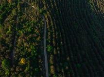 Giovani alberi, piantagioni sui pendii Cima gi? la vista aerea sul canyon di Nistro, fiume, baia di Bakota in parco nazionale Pod fotografia stock
