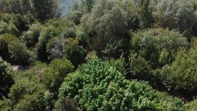 Giovani alberi, piantagioni sui pendii Vista aerea sul canyon di Nistro, fiume, baia di Bakota in parco nazionale Podilski Tovtry archivi video