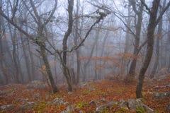 Giovani alberi in una foresta nebbiosa Immagini Stock