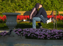Giovani amanti che baciano sul banco nella sosta Fotografie Stock