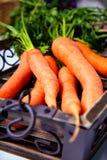 Giovani carote in una casella Fotografia Stock