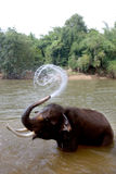 Giovani che bagnano gli elefanti. Immagini Stock