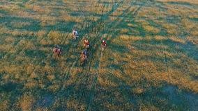 Giovani che ciclano sulle biciclette attraverso il campo verde e giallo del prato di estate video d archivio