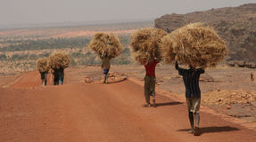 Giovani che trasportano paglia Fotografia Stock Libera da Diritti
