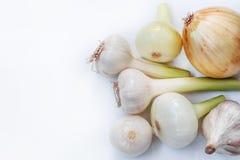 Giovani cipolle e una testa di giovane aglio su un fondo bianco Fotografia Stock