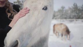 Giovani colpi felici svegli della ragazza un bello cavallo bianco su un ranch del paese I cavalli camminano all'aperto nell'inver archivi video