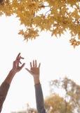 Giovani coppie che raggiungono per le foglie del gingko all'aperto, armi soltanto Immagini Stock