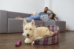 Giovani coppie con un cane a casa Fotografia Stock Libera da Diritti